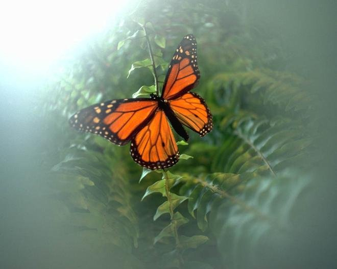 Picture of butterfly 1